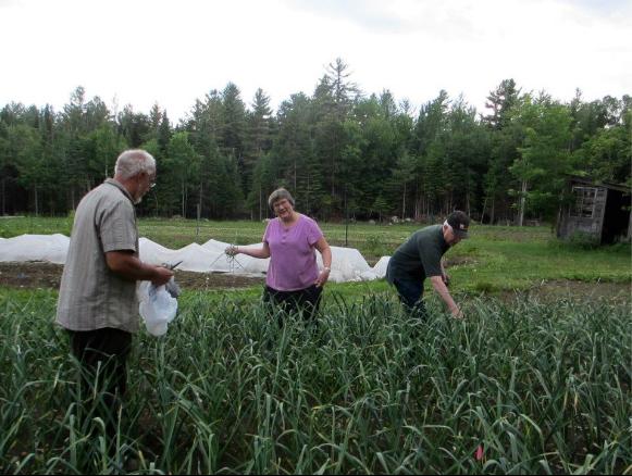 2012 Jun 17 Peg and Don picking garlic scapes