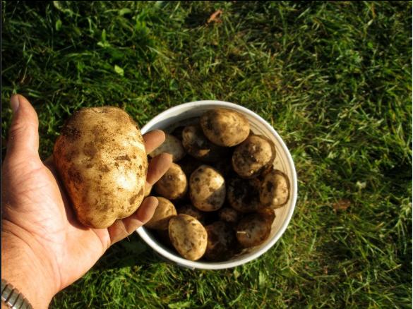 2012 Sep 2 looks like good potato harves