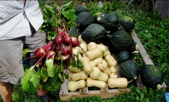 2012 Sept 08 Harvest